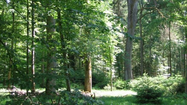 Der St.Galler Wald