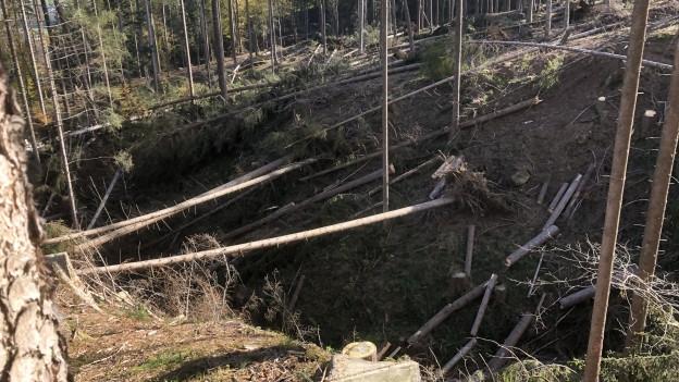 Sturmschäden in einem Bachtobel bei Appenzell