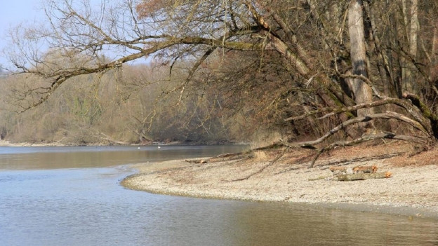 Unverbautes Rheinufer