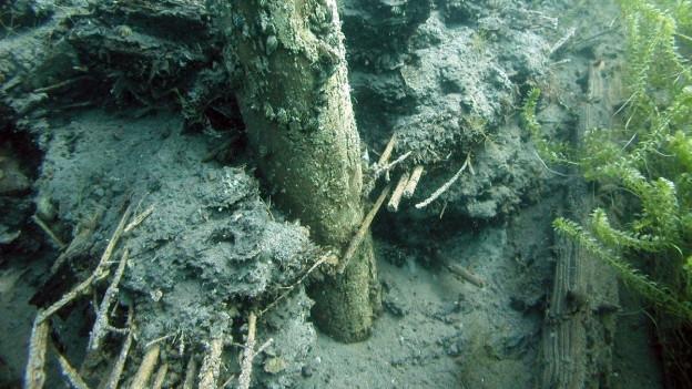 Phähle unter Wasser