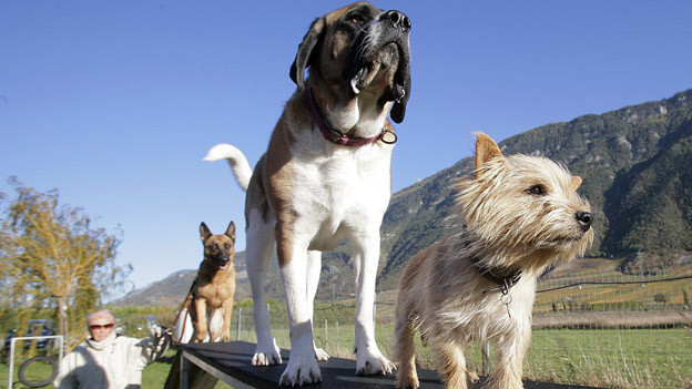 Wie regelt der Kanton St. Gallen in Zukunft das Halten von Hunden?