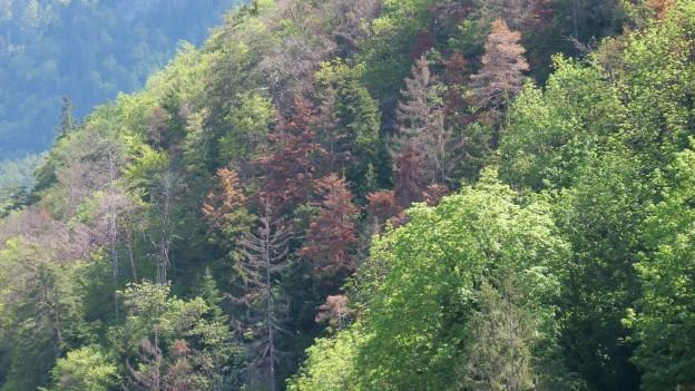Der Wald leidet noch immer unter der Trockenheit.