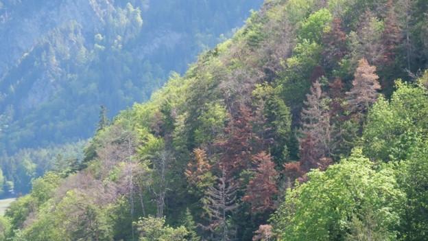 Braune Bäume zwischen grünen.