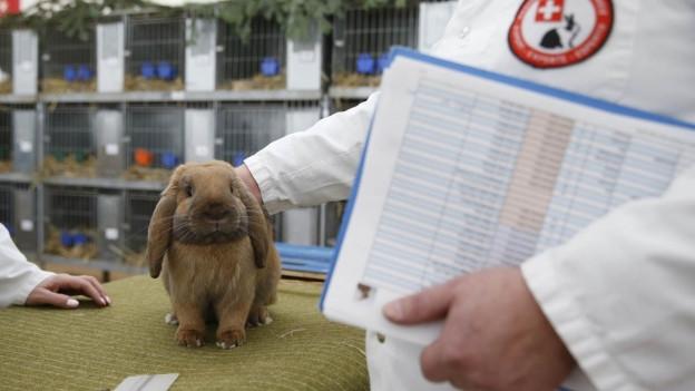 Kaninchen sitzt auf einem Tisch, neben ihm eine Person im weissen Kittel