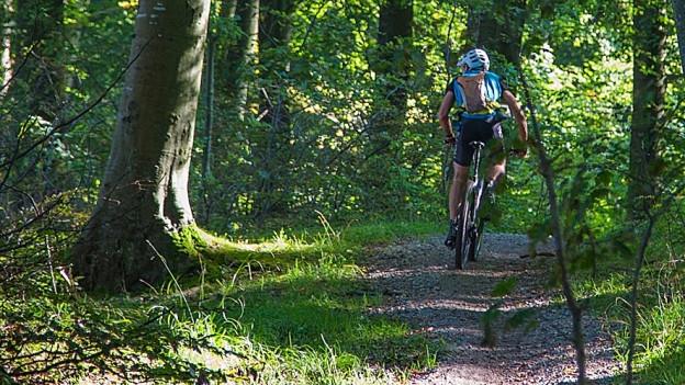 Kanton St. Gallen kündigt Bussen an, für Biker die im Wald die Wege verlassen.