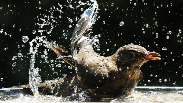 Weniger Vögel rund um den Bodensee