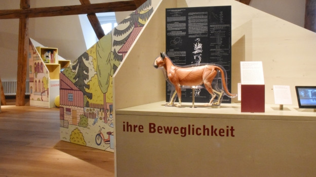 Besucherrekord im Thurgauer Naturmuseum