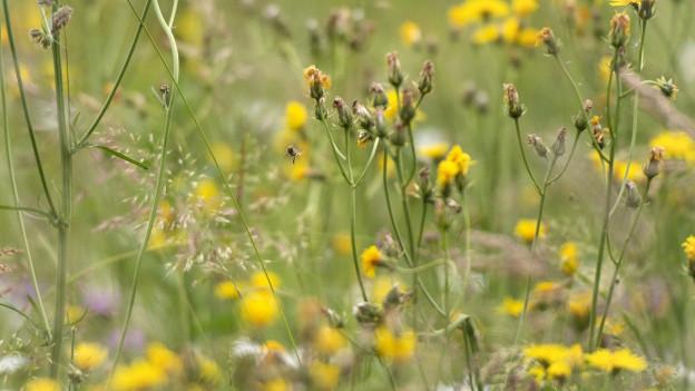 Im Thurgau soll die Biodiversität gefördert werden.