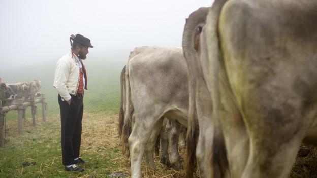 Bauer schaut sich Kühe an