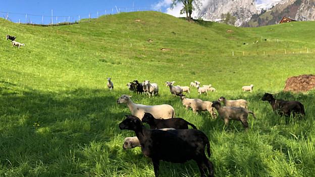 St. Galler Kantonsrat fehlen landwirtschaftliche Innovationen