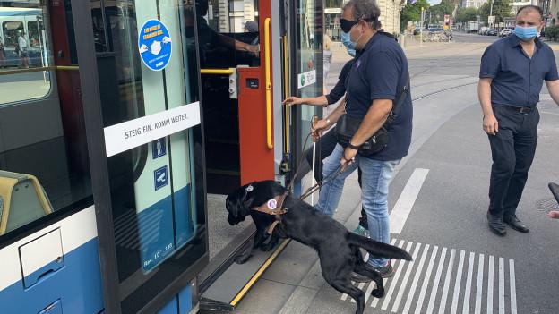 Hund in typischem Führungsgestältli steigt in Tram ein