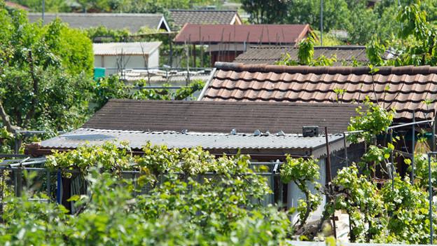 Mit der Schrebergartenidylle ist es auf dem Pfingstweid-Areal vorbei. Jetzt säubern Spezialisten das Areal von Asbest.