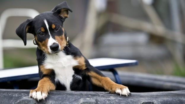 Lieber einheimisch - die Stadtpolizei Kloten warnt vor Hundeimporten aus dem Ausland.