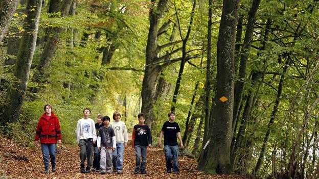 Nebst Wanderern und Tieren sollen im Sihlwald auch Biker und Hündeler toleriert werden.