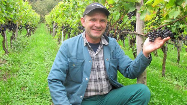 Ernesto Meier kämpft gegen Kirschessigfliege