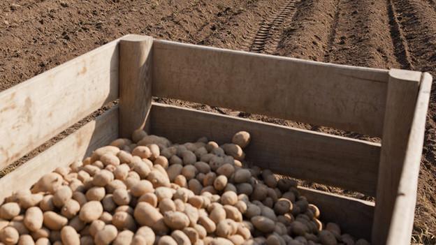 Kartoffelernte in der Schweiz