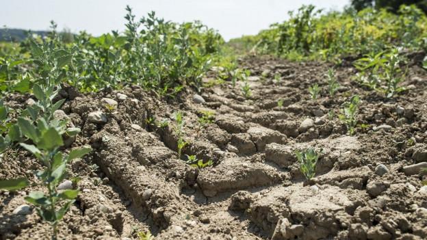 Die Böden sind noch immer zu trocken.