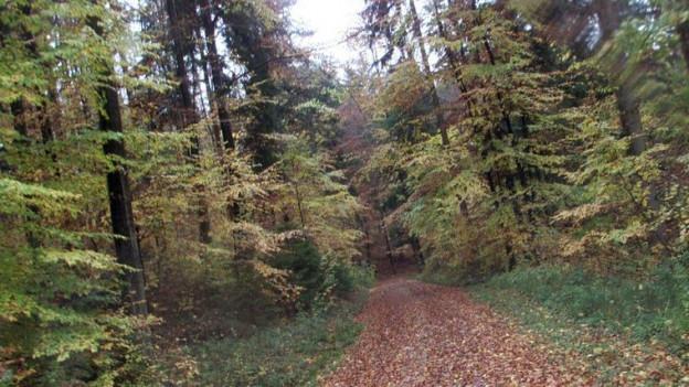 Der Sihlwald gilt seit 2009 als «Naturerlebnispark»