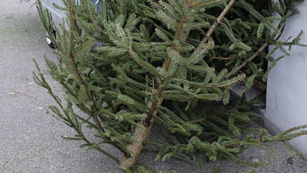 Ein entsorgter Weihnachtsbaum neben einem Container