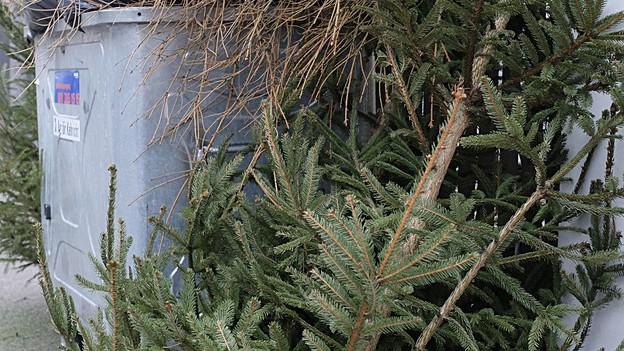 miet weihnachtsb ume f rs gute gewissen regionaljournal z rich schaffhausen srf. Black Bedroom Furniture Sets. Home Design Ideas