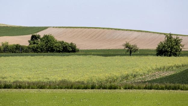 Äcker und Felder in einer sanften Hügellandschaft