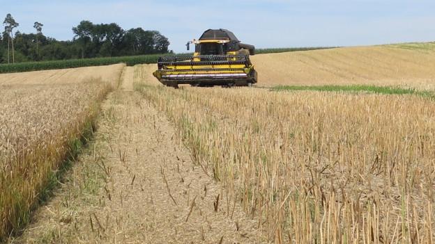 Ein Bauer in der Region Zürich erntet Getreide. Einen grossen Teil davon landet jedoch leider im Abfall.