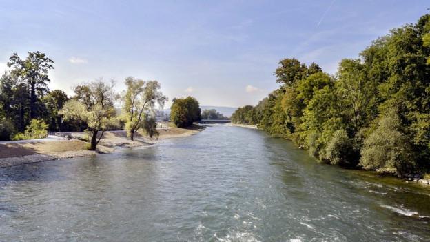 Das renaturierte Ufer der Limmat unterhalb des Werdhölzlis.