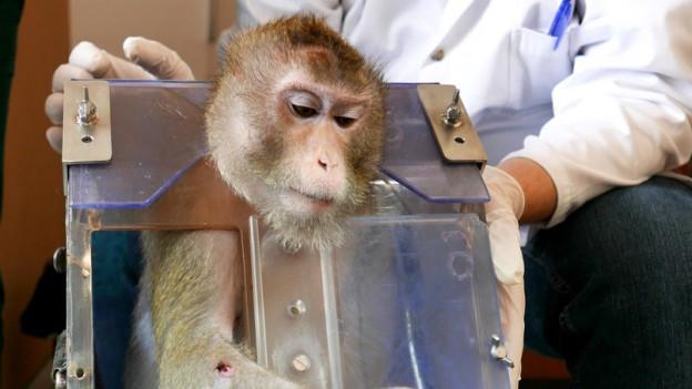 An der Universität Fribourg wird schon heute mit Makaken geforscht.
