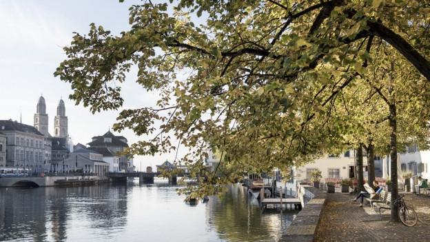 Uferweg am Fluss, im Hintergrund die Türme des Grossmünsters, im Vordergrund ein Baum