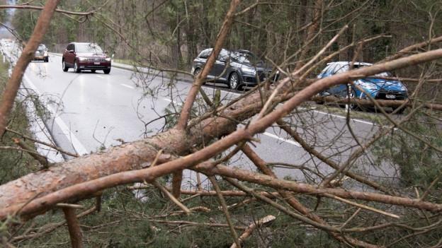 Umgestürzter Baum behindert eine Strasse in Bülach