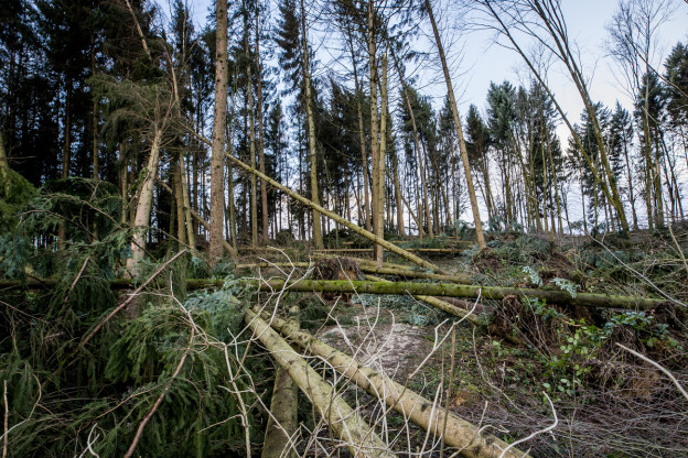 Burglind fällte viele Bäume