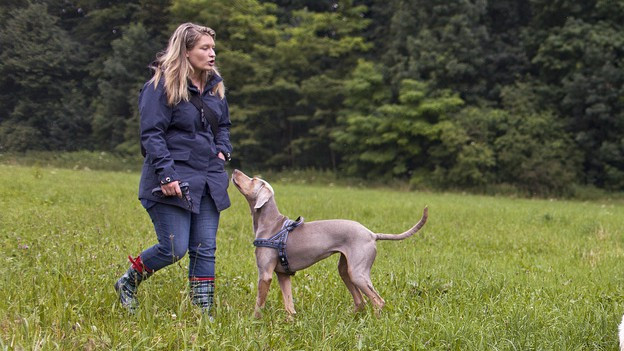 Hundehalter und ihre Lieblinge trainieren auf einer Wiese