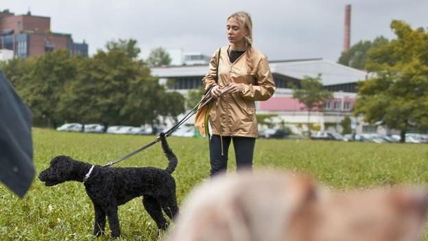 Hund und Halter in einem Kurs