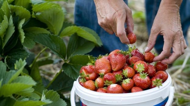 Ein Korb voll mit Erdbeeren