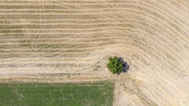 Ein Baum mitten in einem ausgetrockneten Feld