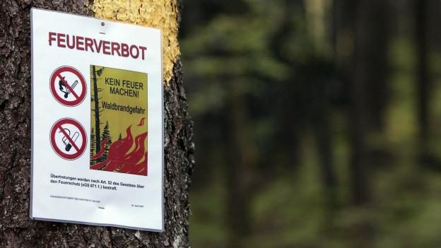 """gelbes Schild """"Feuerverbot"""" an einem Baumstamm"""