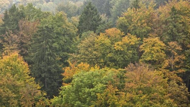 Ein Zürcher Wald im Herbst.