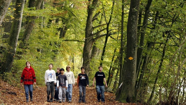 Spaziergängergruppe auf Waldweg
