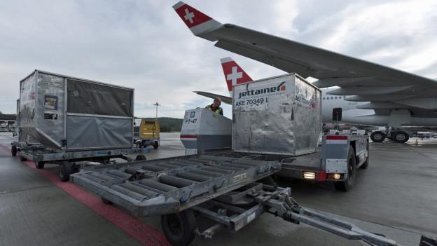 Mitarbeiter beladen am Flughafen Zürich ein SWISS-Flugzeug mit Fracht.