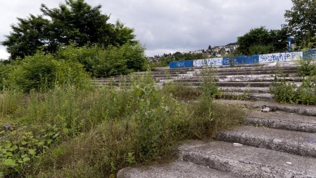 Wo früher das Hardturmstadion stand, liegt heute eine Brache, wo die Natur den Takt angibt.