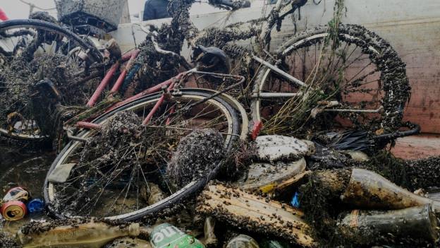 Von Muscheln überkrusteter Abfall in einer Mulde