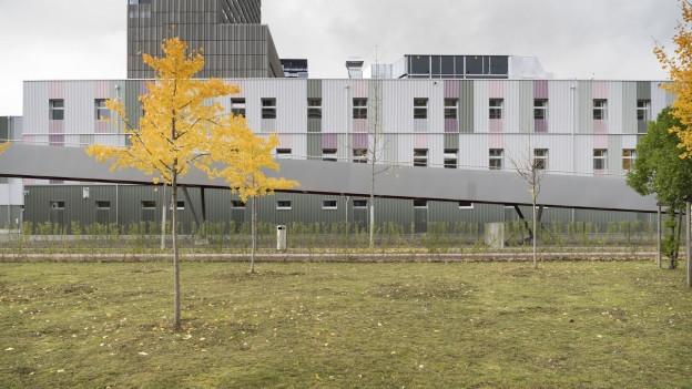 Ein Haus langes Haus, im Vordergrund Bäume im Herbstlaub