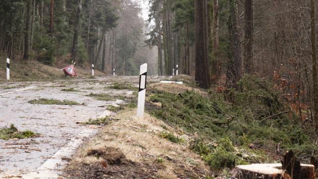 Umgekippte Bäume auf einer Strasse