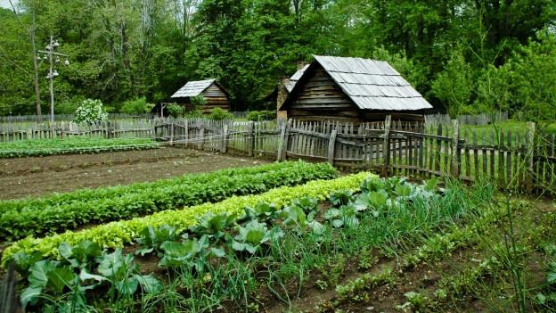 Iert cultivà cun verdura e salata.