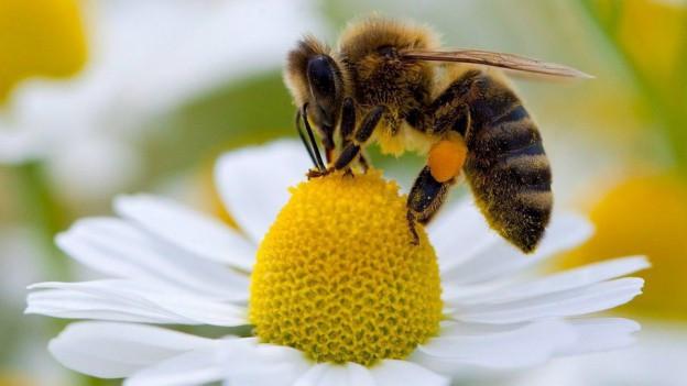 In avieul rimna nectar.