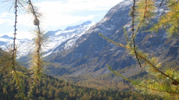 Vista da Puntraschigna en Val Roseg.