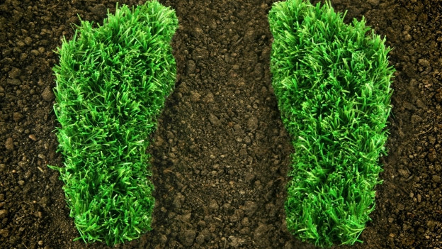 Dus impronts d'erva sin terra.