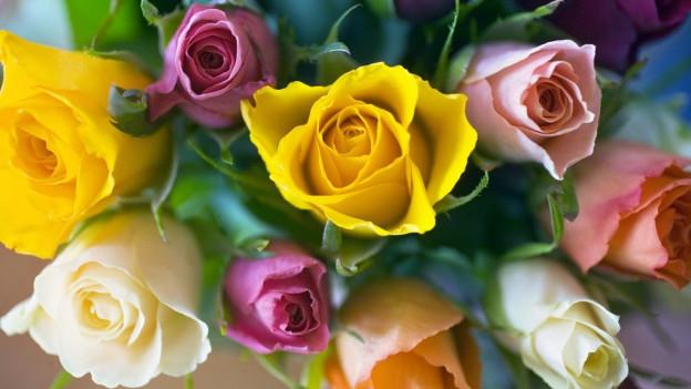 matg fluras cun rosas in differentas colurs
