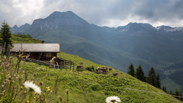 In'alp sur St. Antönien en il Grischun.