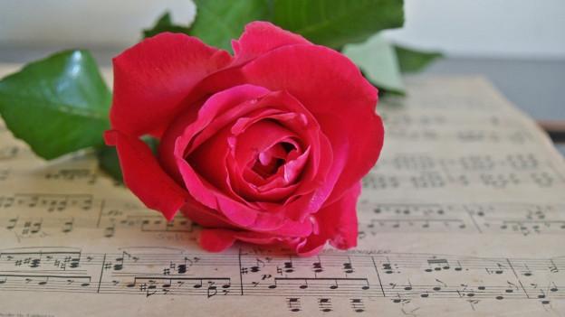 in fegl da notas e sisu ina rosa cotschna